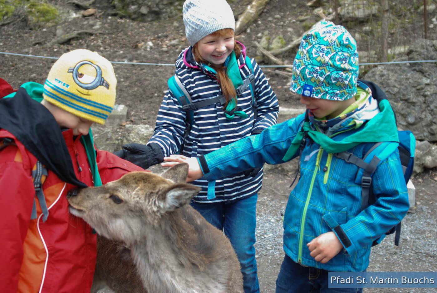 Biber Buochs im Tierpark Goldau
